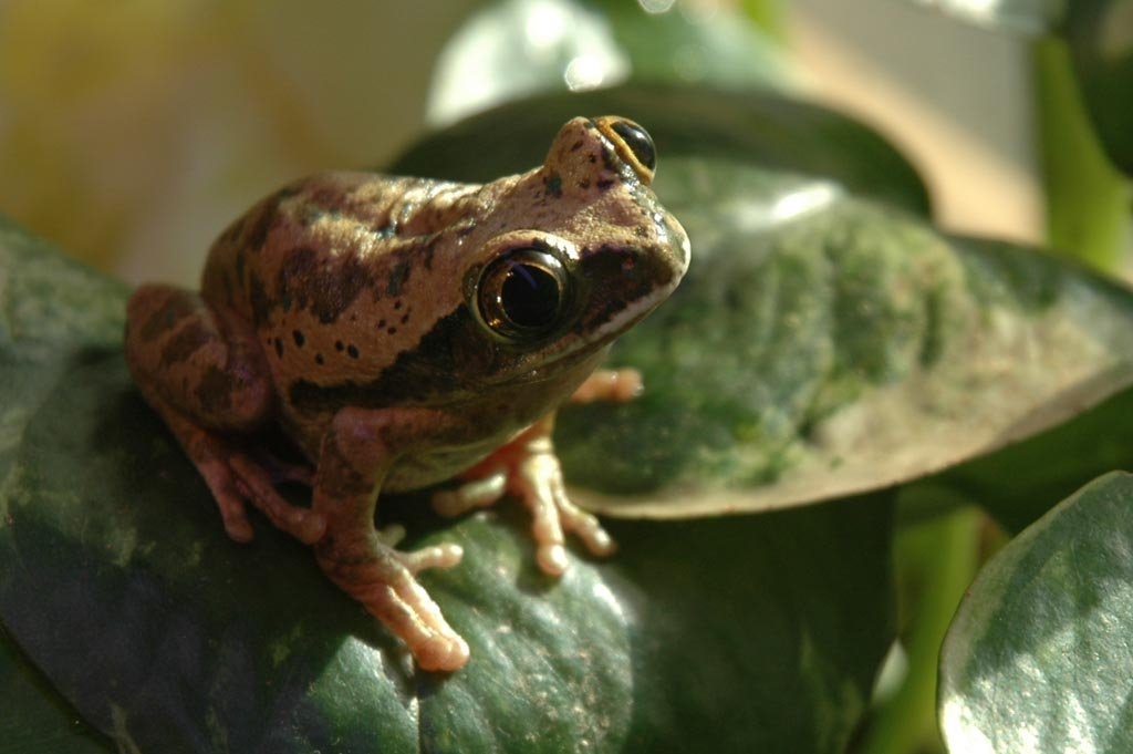 My green tree frog went missing one summer