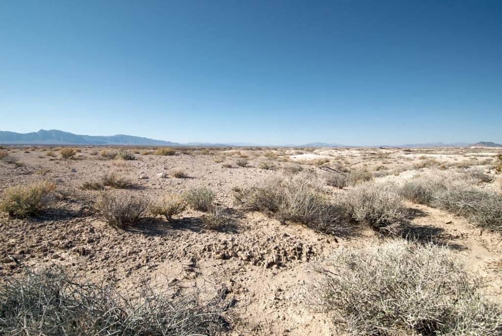 The scruffy, alien-looking landscape of most of Ash Meadows