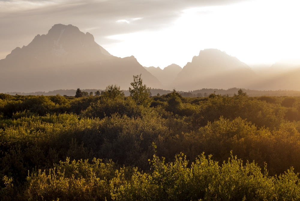 Collection of bushes looking for wild animals in Grand Teton